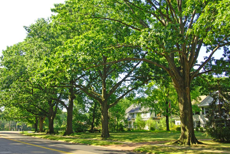Tree lined street in Shaker Heights, Ohio
