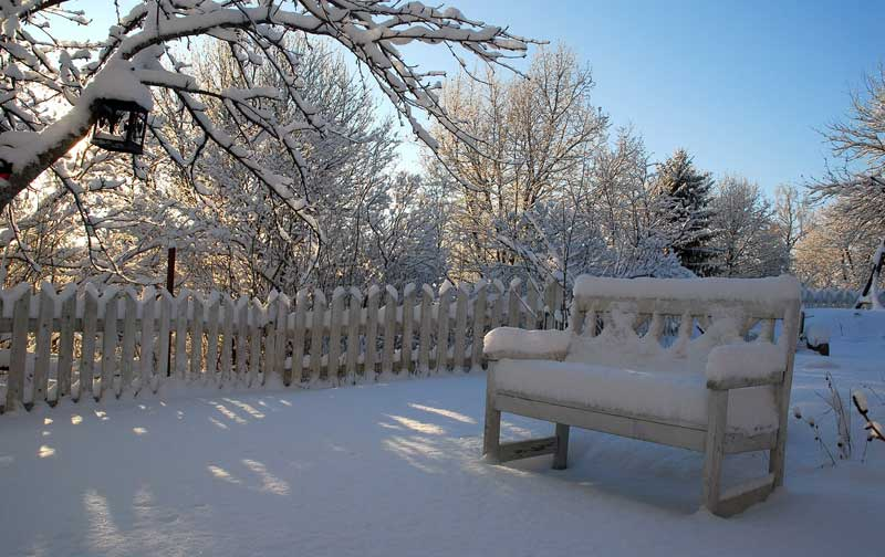 Bench in snowy winter garden