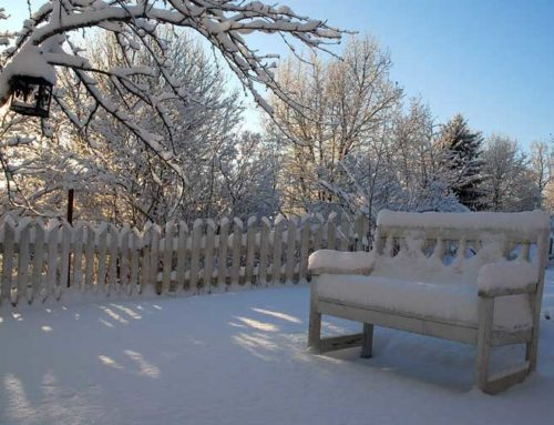 Winterizing Your Home (and Garden)