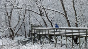 Winter Blues by Gretchen Gaede