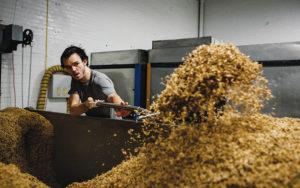 Chris Eaton, a Haus Malts employee, shoveling grain
