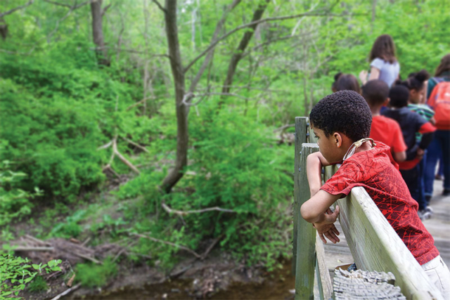 A young boy looking out over the forest at the Nature Center at Shaker Lakes