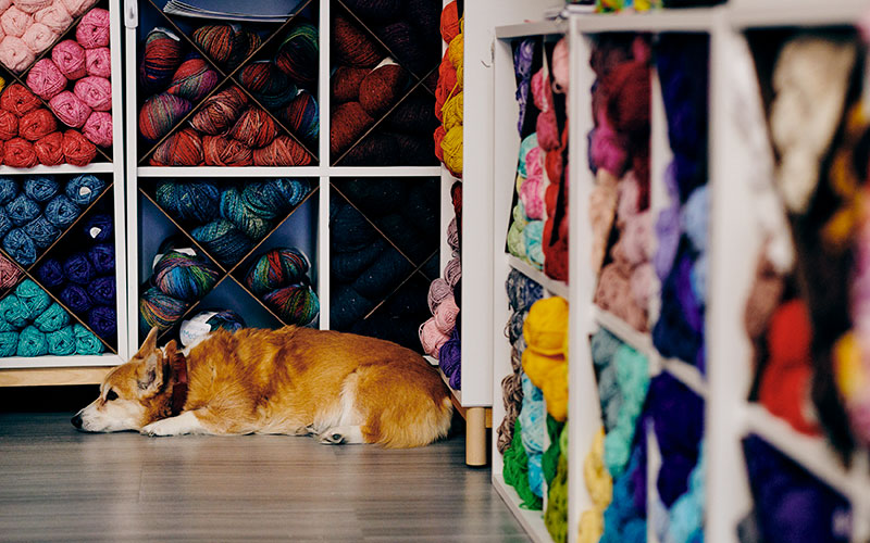 Dog sleeping in front of yarn displays at Around the Table Yarns