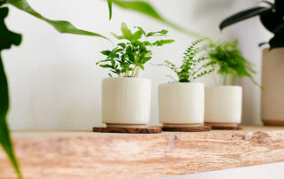 Three small planters on wooden shelf at STUMP