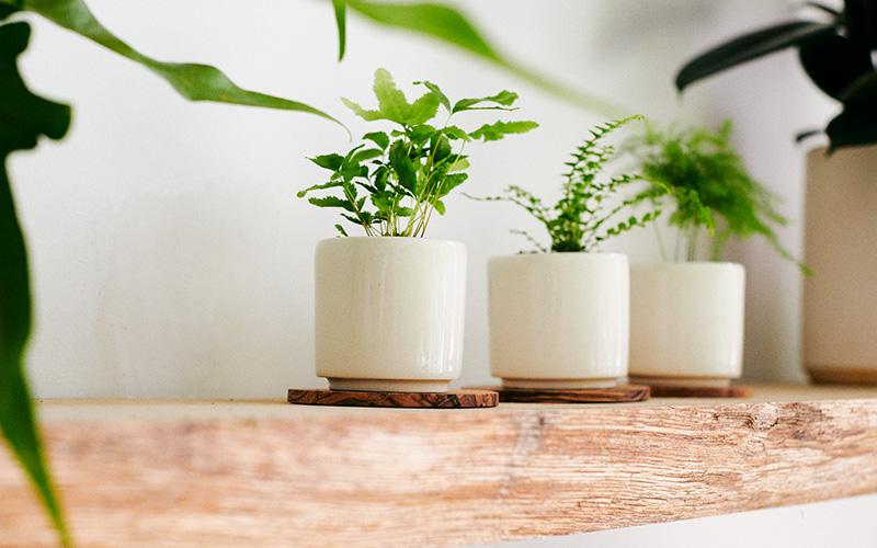 Three small planters on wooden shelf at STUMP